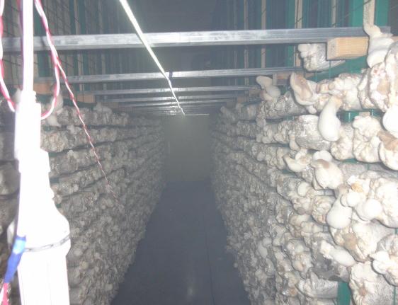 蘑菇养殖网片