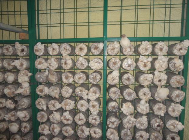 发菌房网架